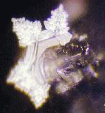 Nagoya City Japan: Ein Kristall, wie er in Großstädten selten zu finden ist. Welcher Faktor hindert den Wasserkristall daran, ein vollständiges Hexagon zu bilden?